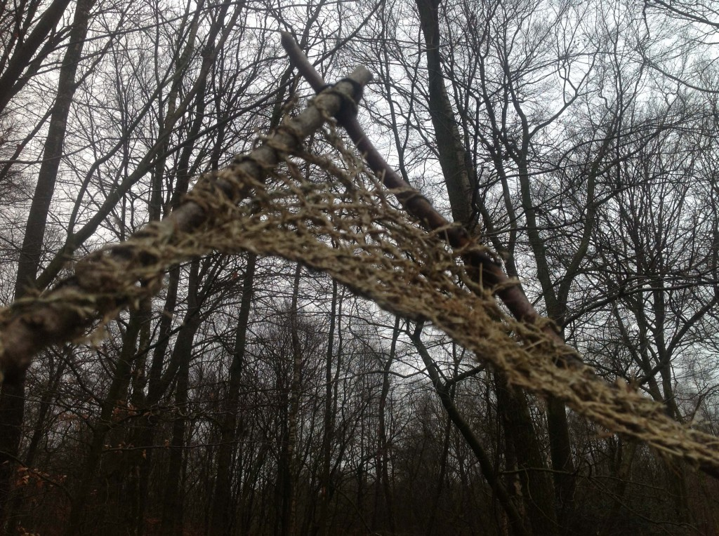 grasvlecht in bos